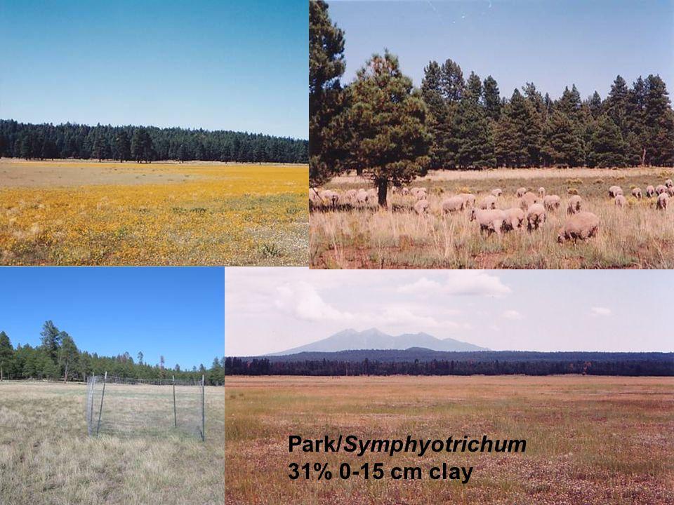 Park/Symphyotrichum 31% 0-15 cm clay