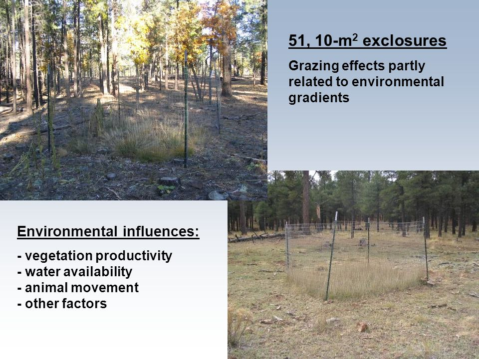 51, 10-m 2 exclosures Grazing effects partly related to environmental gradients Environmental influences: - vegetation productivity - water availabili