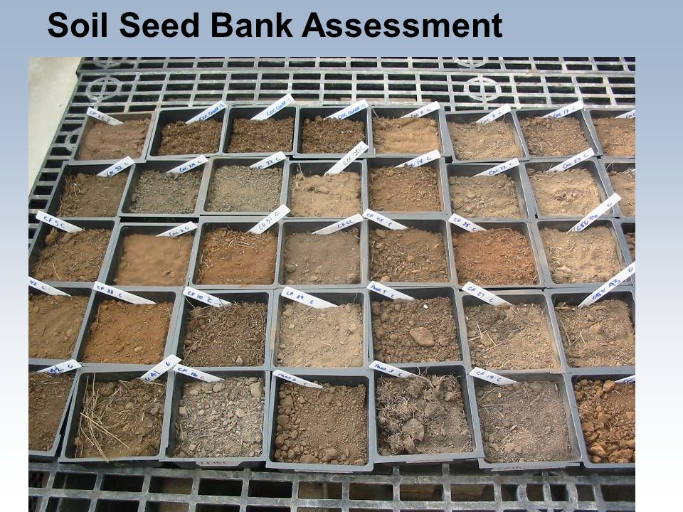 Soil Seed Bank Assessment