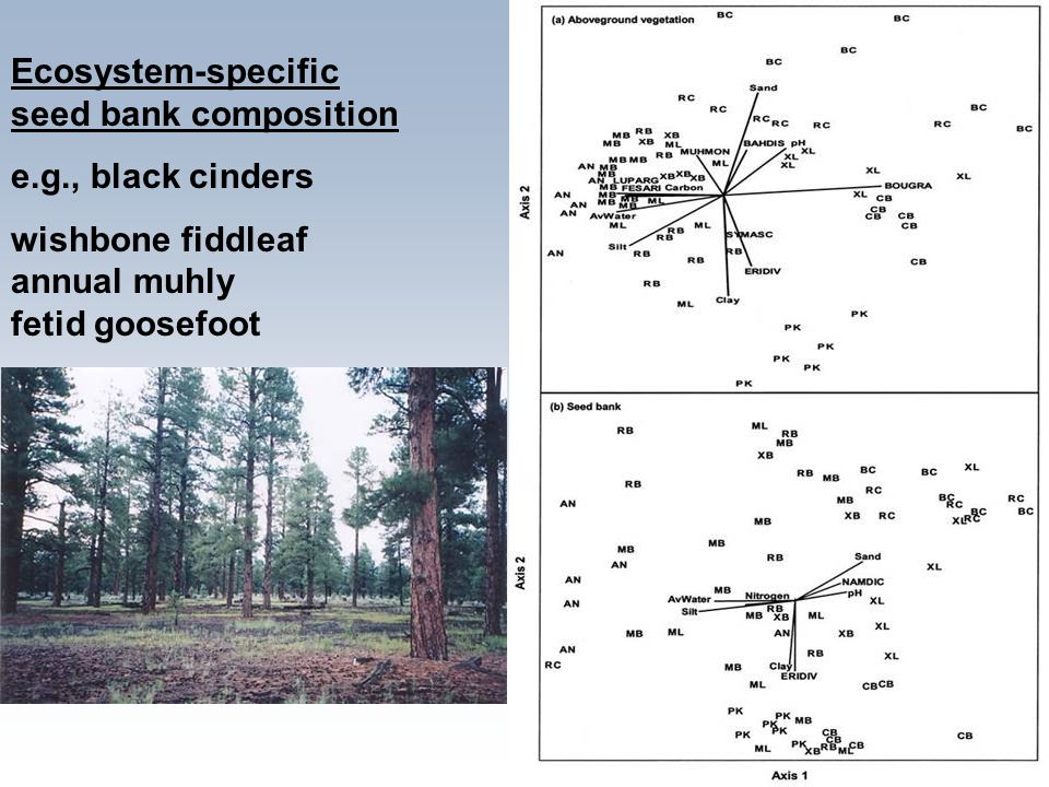 Ecosystem-specific seed bank composition e.g., black cinders wishbone fiddleaf annual muhly fetid goosefoot