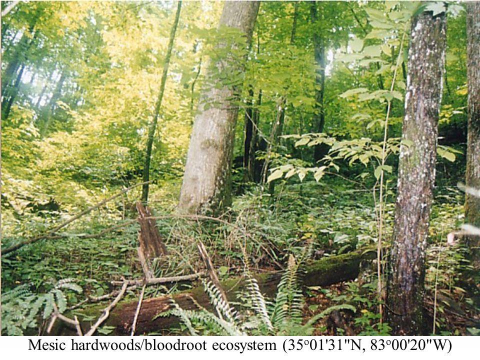 Mesic hardwoods/bloodroot ecosystem (35 o 01  N, 83 o 00 20 W)