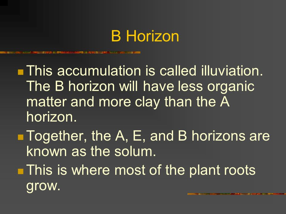 B Horizon This accumulation is called illuviation. The B horizon will have less organic matter and more clay than the A horizon. Together, the A, E, a