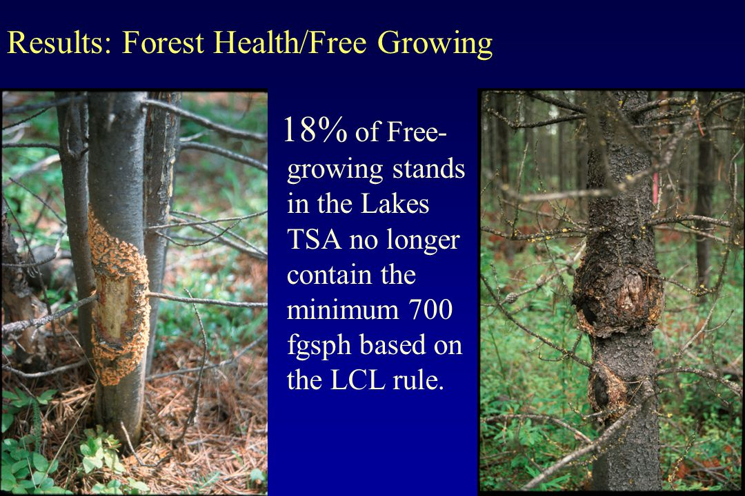 18% of Free- growing stands in the Lakes TSA no longer contain the minimum 700 fgsph based on the LCL rule. Results: Forest Health/Free Growing