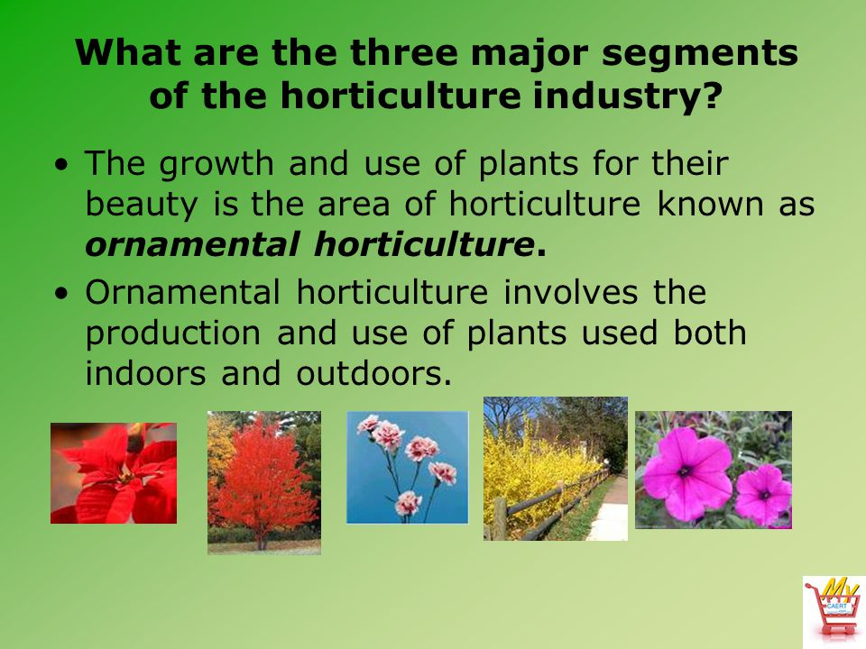 What are the three major segments of the horticulture industry? The growth and use of plants for their beauty is the area of horticulture known as orn