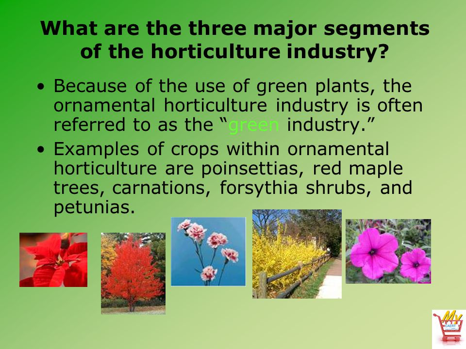 What are the three major segments of the horticulture industry? Because of the use of green plants, the ornamental horticulture industry is often refe