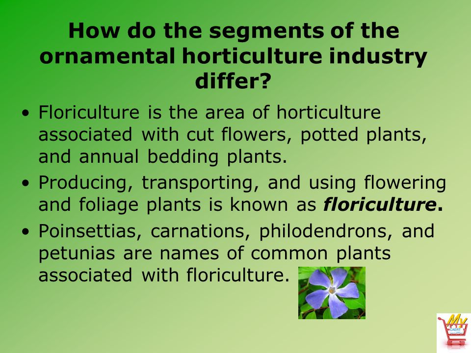 How do the segments of the ornamental horticulture industry differ? Floriculture is the area of horticulture associated with cut flowers, potted plant