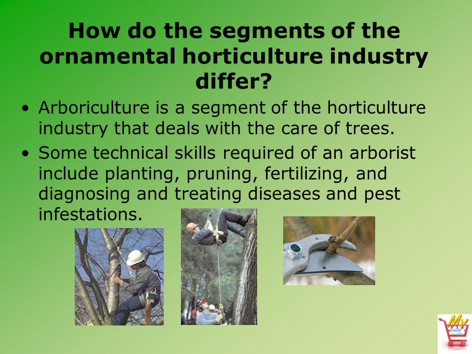 How do the segments of the ornamental horticulture industry differ? Arboriculture is a segment of the horticulture industry that deals with the care o