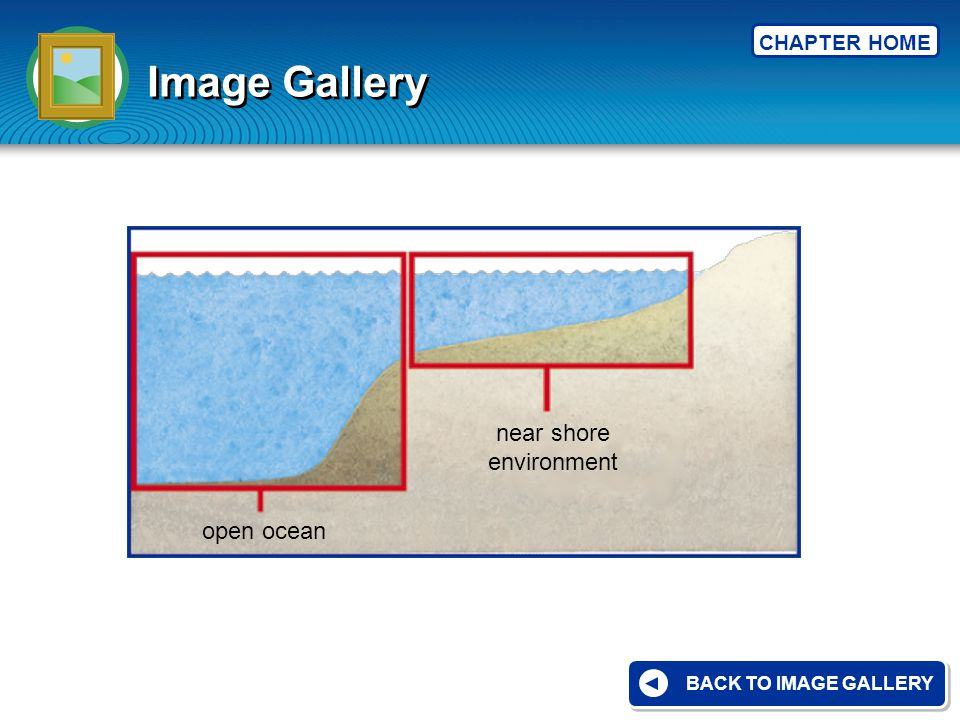 CHAPTER HOME Image Gallery BACK TO IMAGE GALLERY near shore environment open ocean