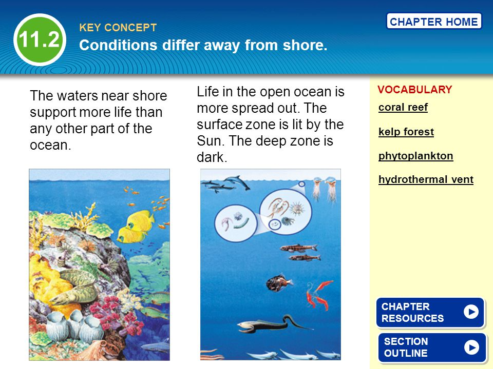 VOCABULARY KEY CONCEPT CHAPTER HOME The waters near shore support more life than any other part of the ocean. Life in the open ocean is more spread ou