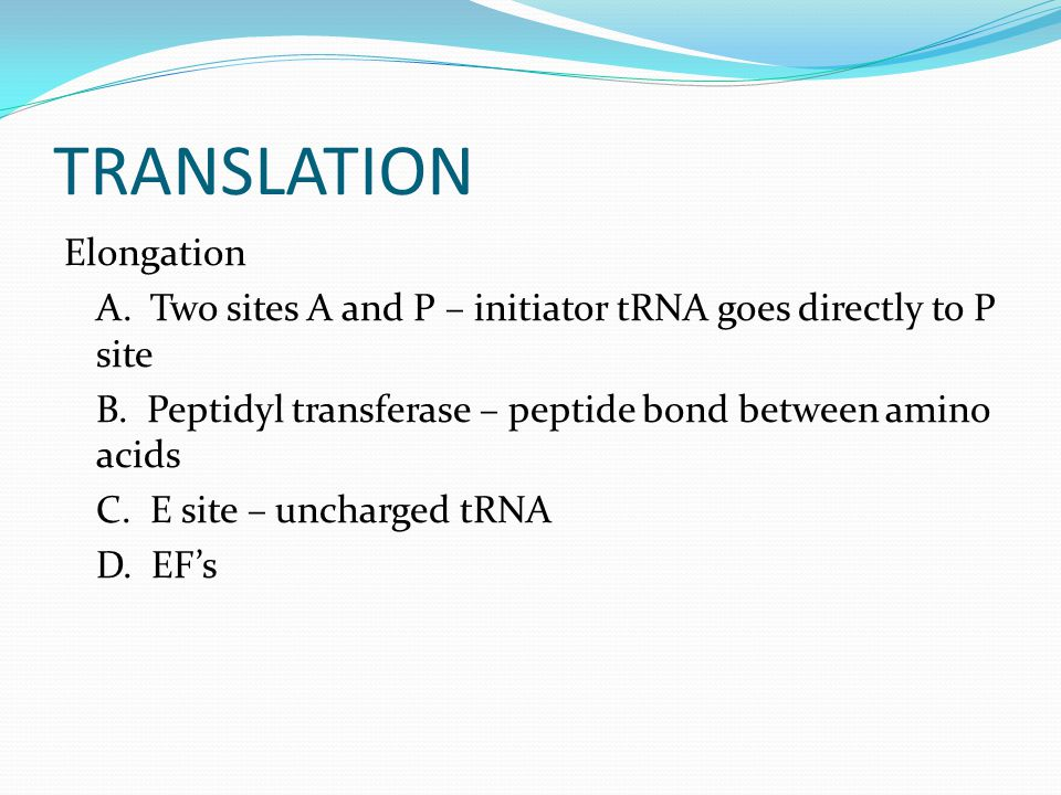 TRANSLATION Elongation A. Two sites A and P – initiator tRNA goes directly to P site B.