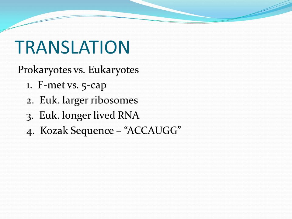 "TRANSLATION Prokaryotes vs. Eukaryotes 1. F-met vs. 5-cap 2. Euk. larger ribosomes 3. Euk. longer lived RNA 4. Kozak Sequence – ""ACCAUGG"""