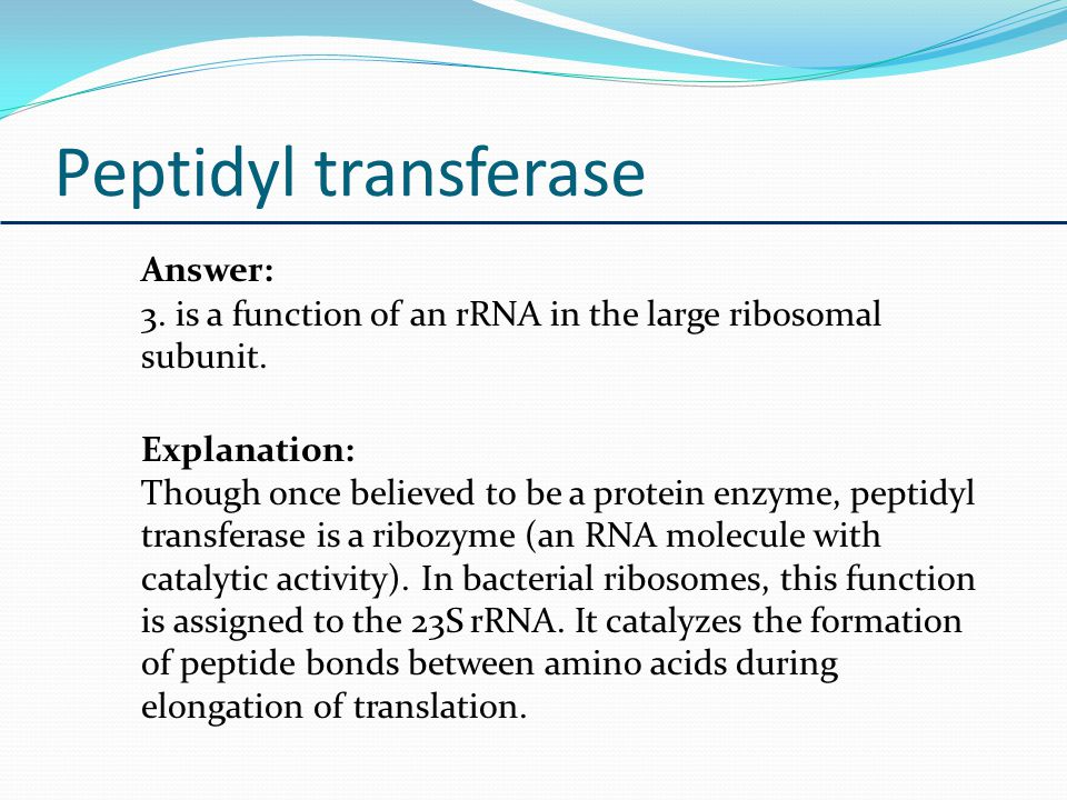 Peptidyl transferase Answer: 3. is a function of an rRNA in the large ribosomal subunit. Explanation: Though once believed to be a protein enzyme, pep