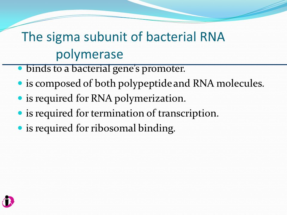 The sigma subunit of bacterial RNA polymerase Answer: 1.