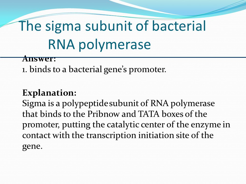 The phrase one-gene:one-polypeptide is more accurate than one-gene:one-enzyme because Answer: 4.