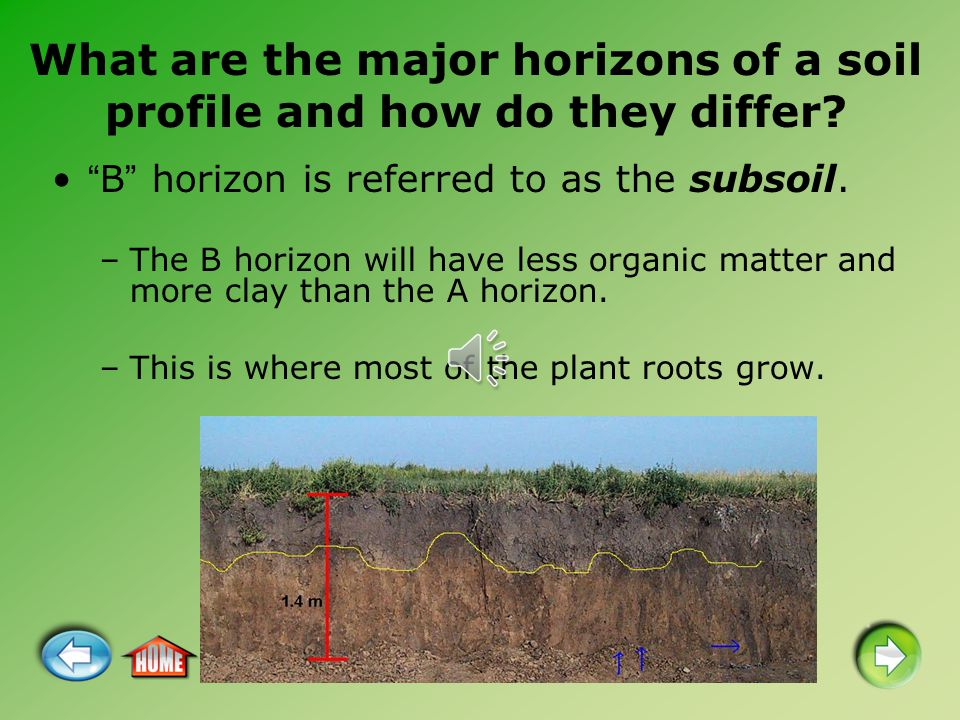 "What are the major horizons of a soil profile and how do they differ? ""B"" horizon is referred to as the subsoil. –The B horizon will have less organic"