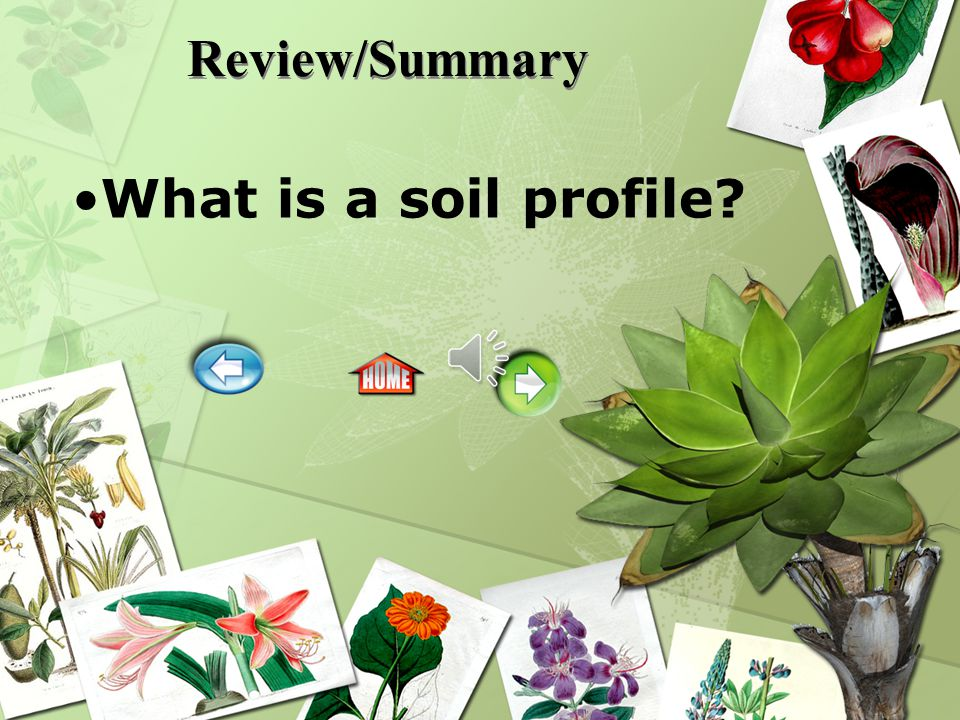 Review/Summary What is a soil profile?