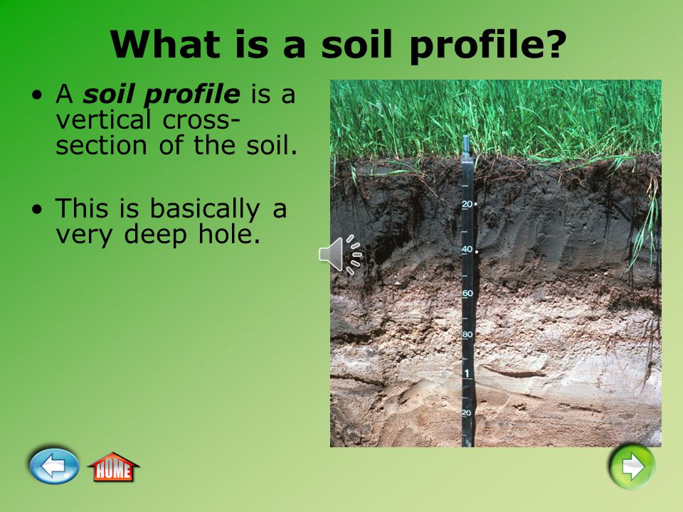 What is a soil profile? A soil profile is a vertical cross- section of the soil. This is basically a very deep hole.