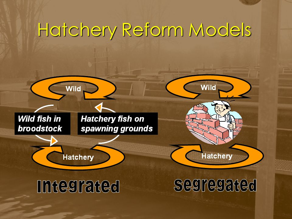 ` Question What risk is involved in the 'segregated' hatchery model.