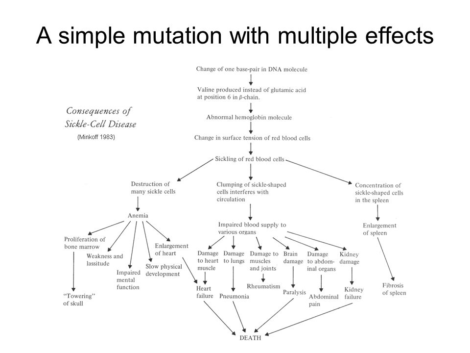 A simple mutation with multiple effects