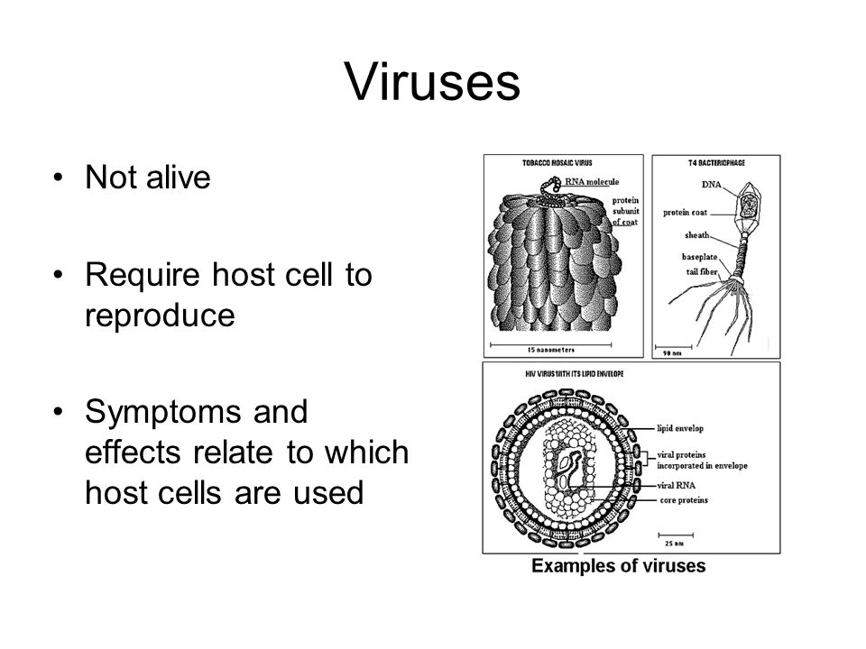 Viruses Not alive Require host cell to reproduce Symptoms and effects relate to which host cells are used