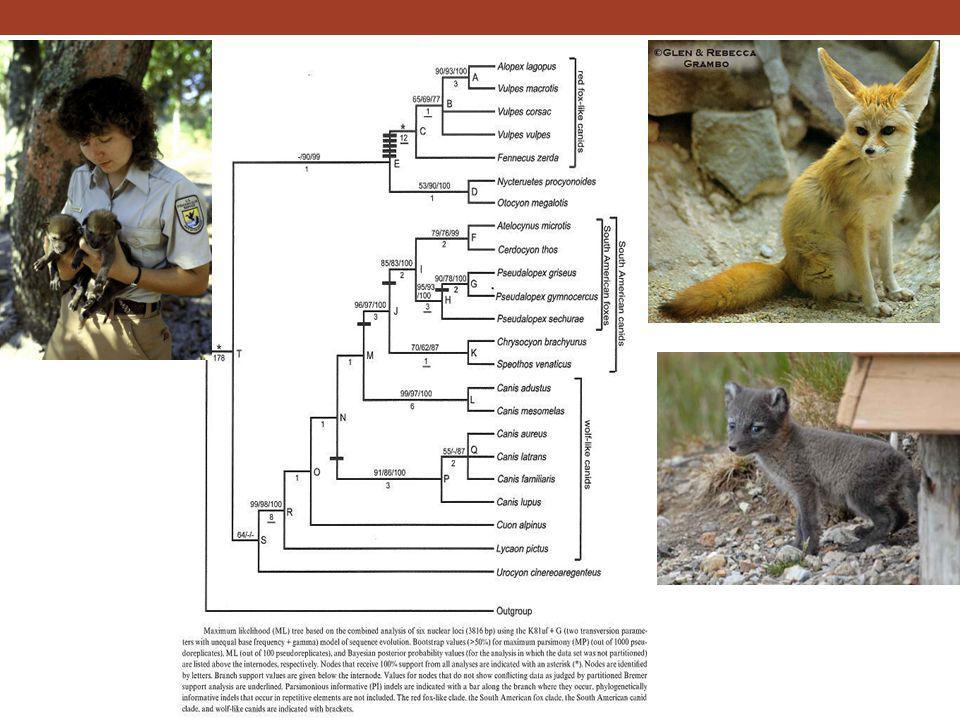 2.10 Relationships among major groups of vertebrates