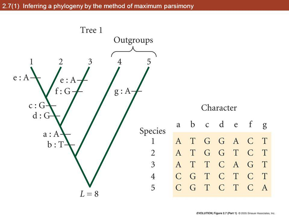 2.7(1) Inferring a phylogeny by the method of maximum parsimony