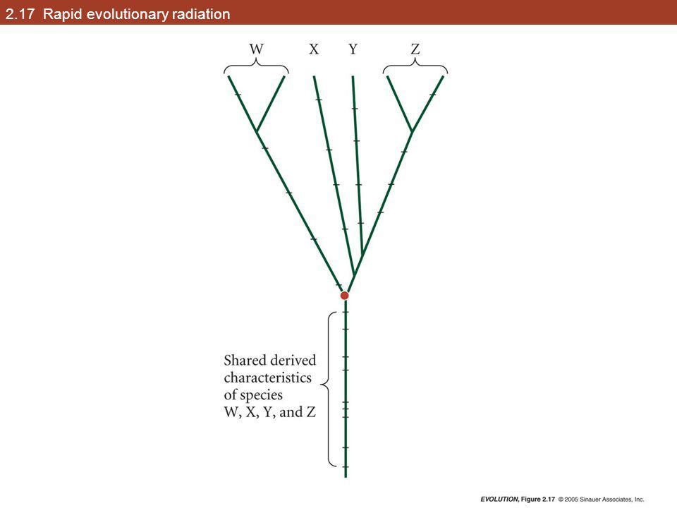 2.17 Rapid evolutionary radiation