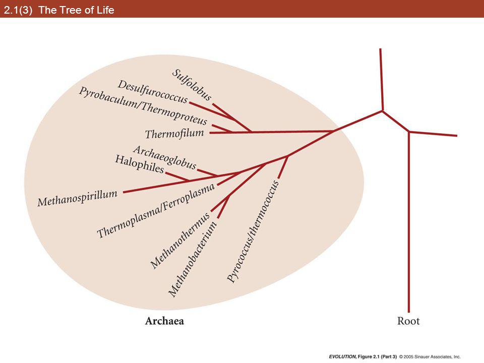 2.2 Darwin's representation of hypothetical phylogenetic relationships