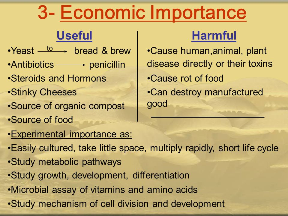 3- Economic Importance Harmful Cause human,animal, plant disease directly or their toxins Cause rot of food Can destroy manufactured good Useful Yeast
