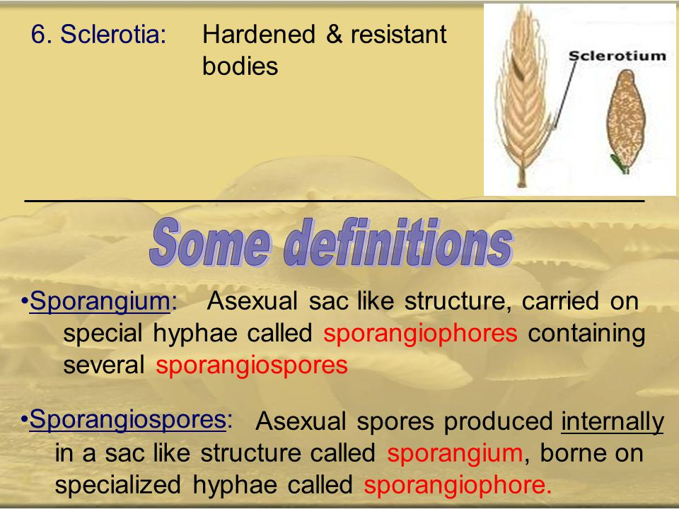 6. Sclerotia:Hardened & resistant bodies Sporangium: Asexual sac like structure, carried on special hyphae called sporangiophores containing several s