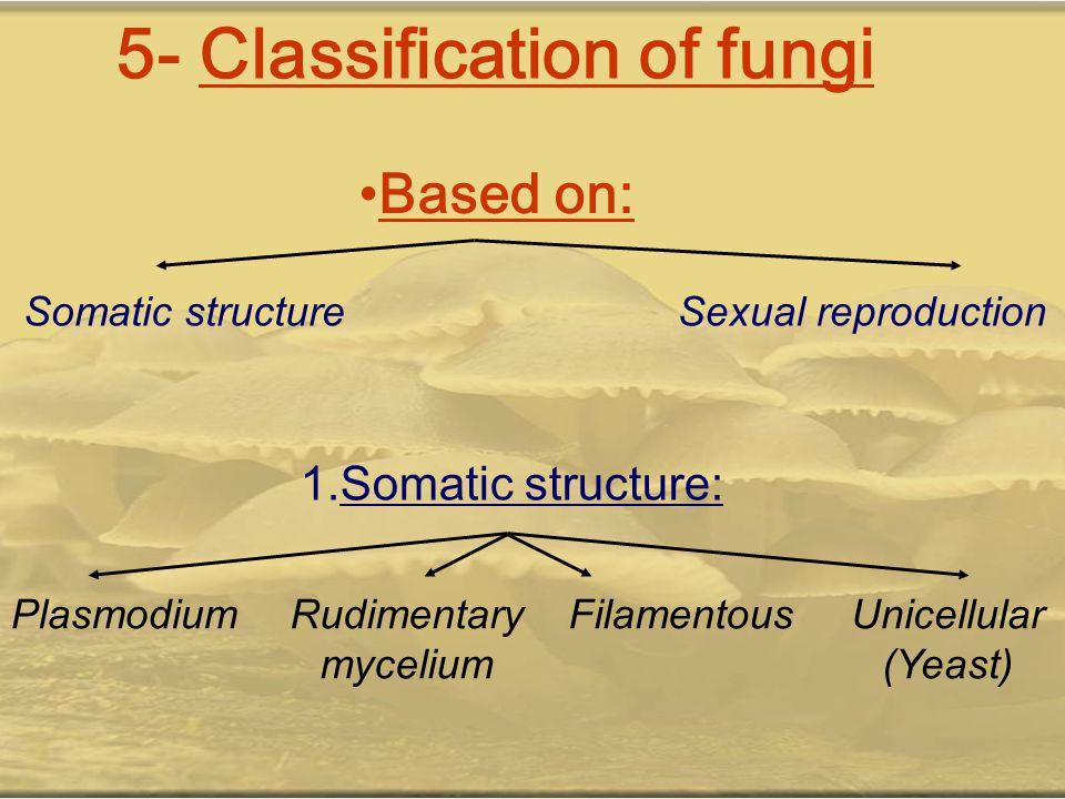 5- Classification of fungi Based on: Somatic structureSexual reproduction 1.Somatic structure: PlasmodiumRudimentary mycelium FilamentousUnicellular (