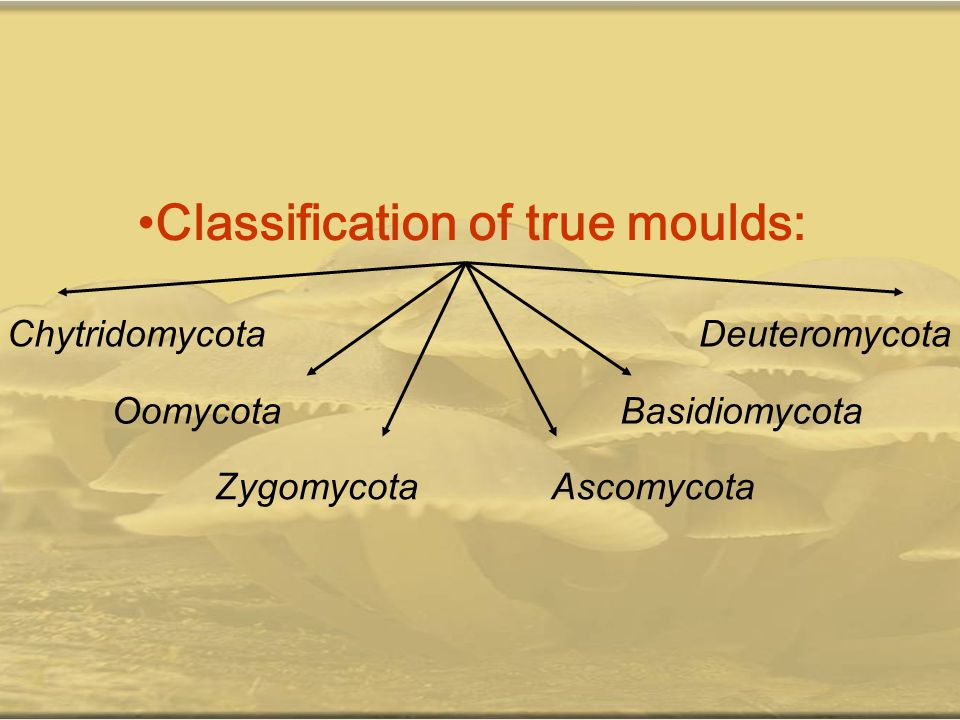 Classification of true moulds: Chytridomycota Oomycota ZygomycotaAscomycota Basidiomycota Deuteromycota