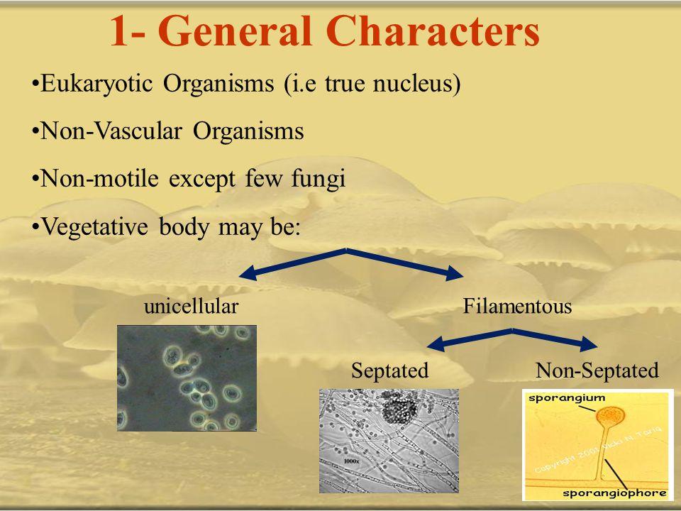 1- General Characters Eukaryotic Organisms (i.e true nucleus) Non-Vascular Organisms Non-motile except few fungi Vegetative body may be: unicellularFi