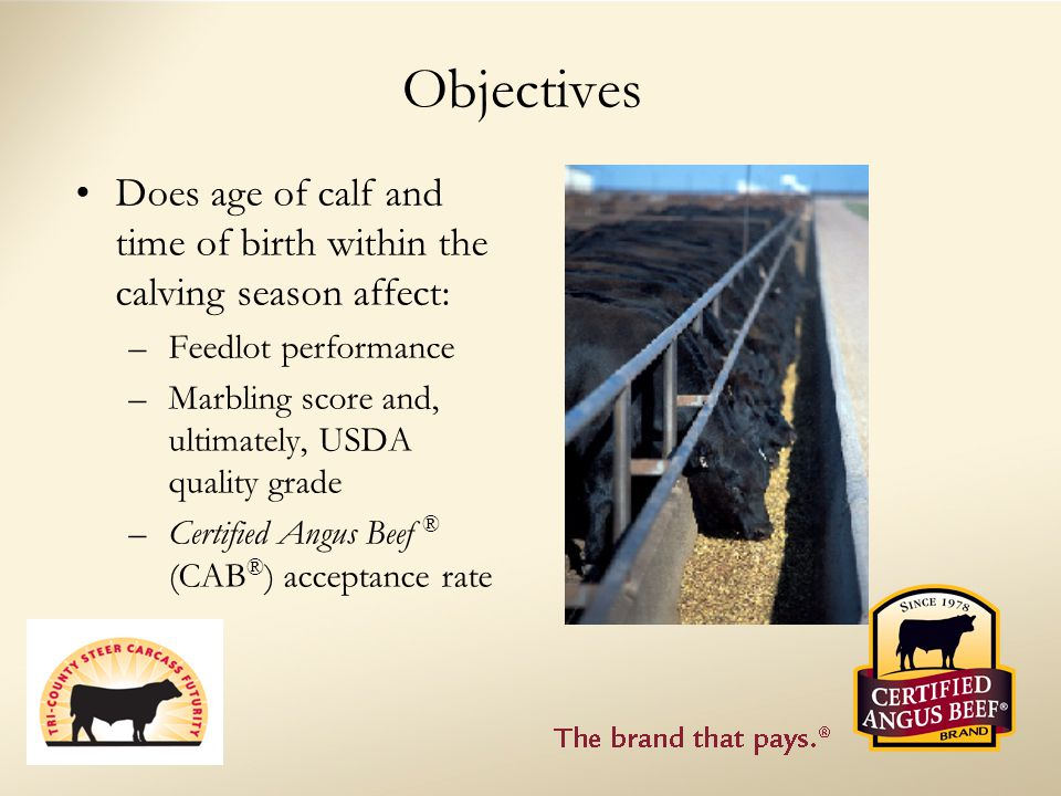 Objectives Does age of calf and time of birth within the calving season affect: –Feedlot performance –Marbling score and, ultimately, USDA quality grade –Certified Angus Beef ® (CAB ® ) acceptance rate