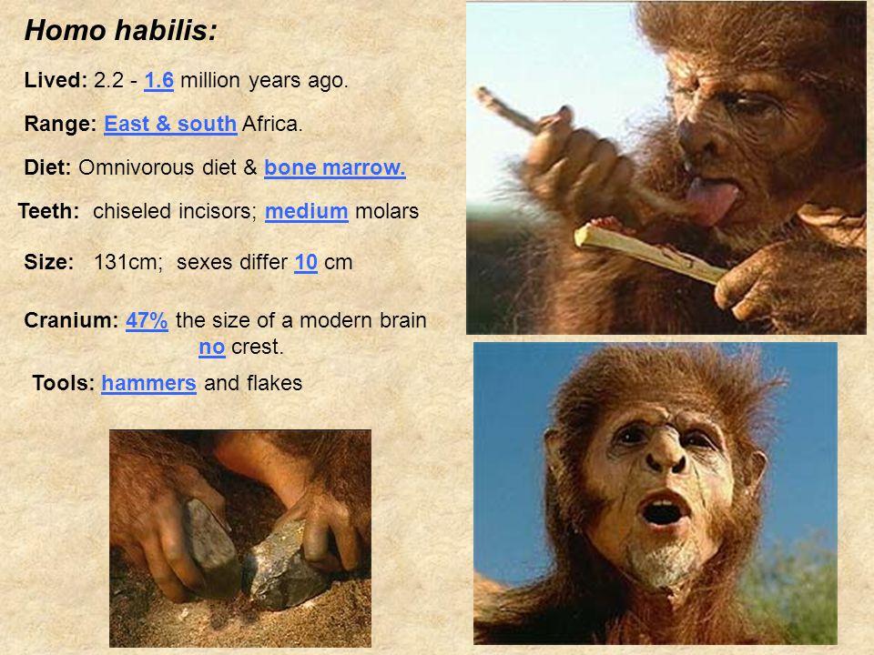 Homo habilis: Lived: 2.2 - 1.6 million years ago. Range: East & south Africa.