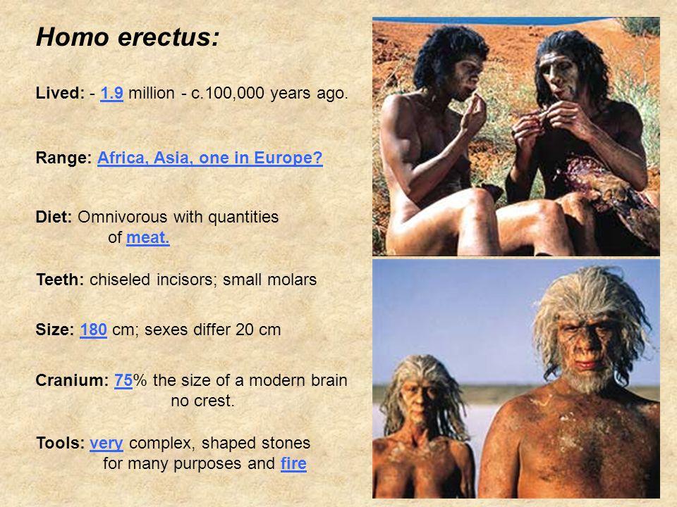 Homo erectus: Lived: - 1.9 million - c.100,000 years ago.