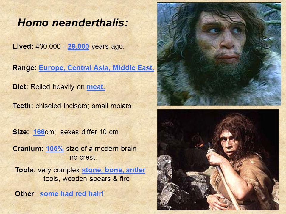 Homo neanderthalis: Lived: 430,000 - 28,000 years ago.