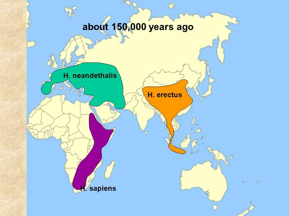 H. neandethalis H. erectus H. sapiens about 150,000 years ago