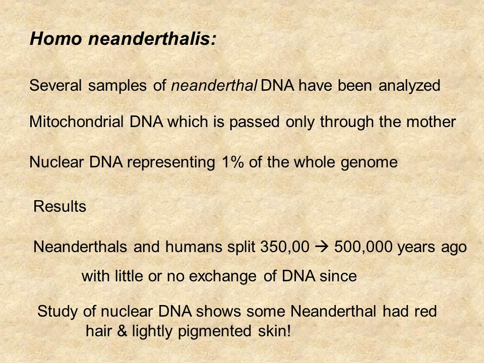 Homo neanderthalis: Several samples of neanderthal DNA have been analyzed Mitochondrial DNA which is passed only through the mother Nuclear DNA representing 1% of the whole genome Results Neanderthals and humans split 350,00  500,000 years ago with little or no exchange of DNA since Study of nuclear DNA shows some Neanderthal had red hair & lightly pigmented skin!