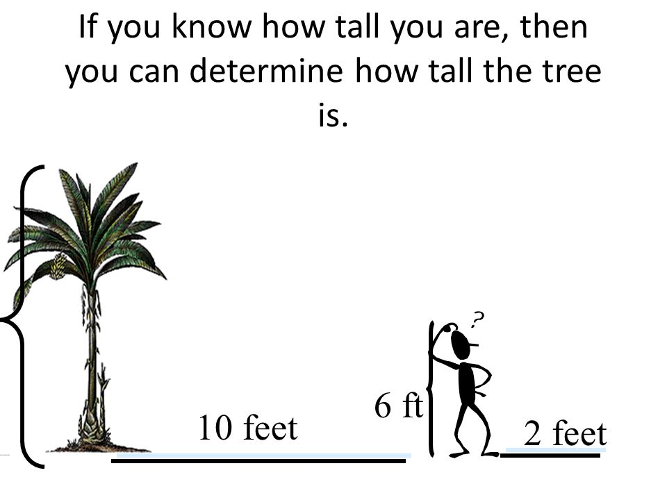 If you know how tall you are, then you can determine how tall the tree is. 10 feet 2 feet 6 ft