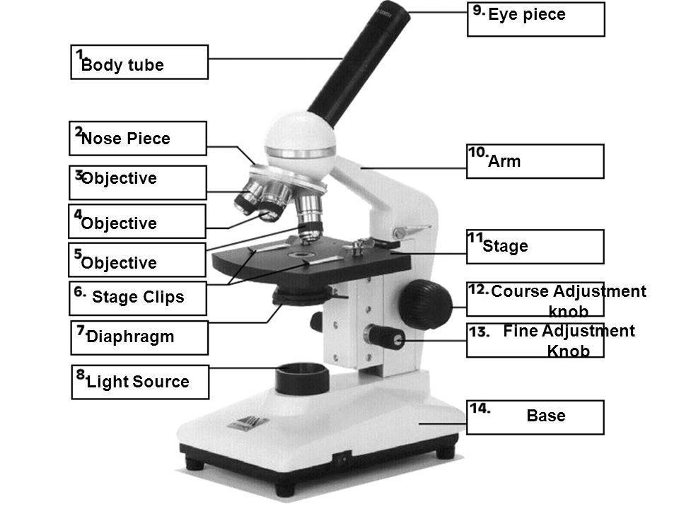 Body tube Nose Piece Objective Stage Clips Diaphragm Light Source Eye piece Arm Stage Course Adjustment knob Fine Adjustment Knob Base