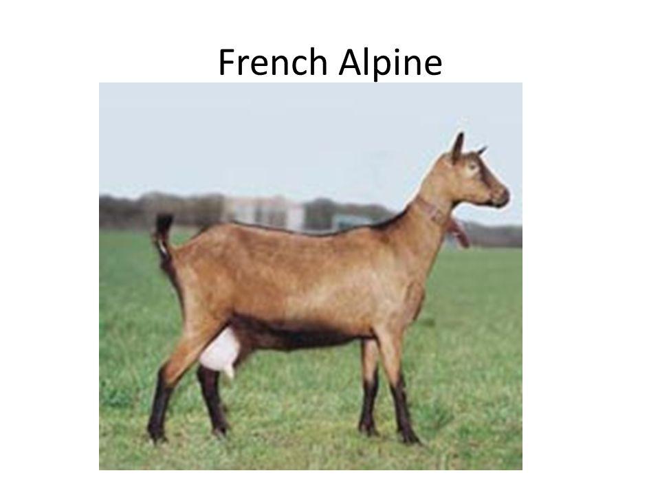 French Alpine