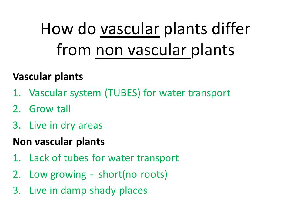 Explain why vascular plants are better suited to life in dry areas Vascular plants are better suited to dry areas because the well developed vascular system quickly transports water & minerals throughout the plant