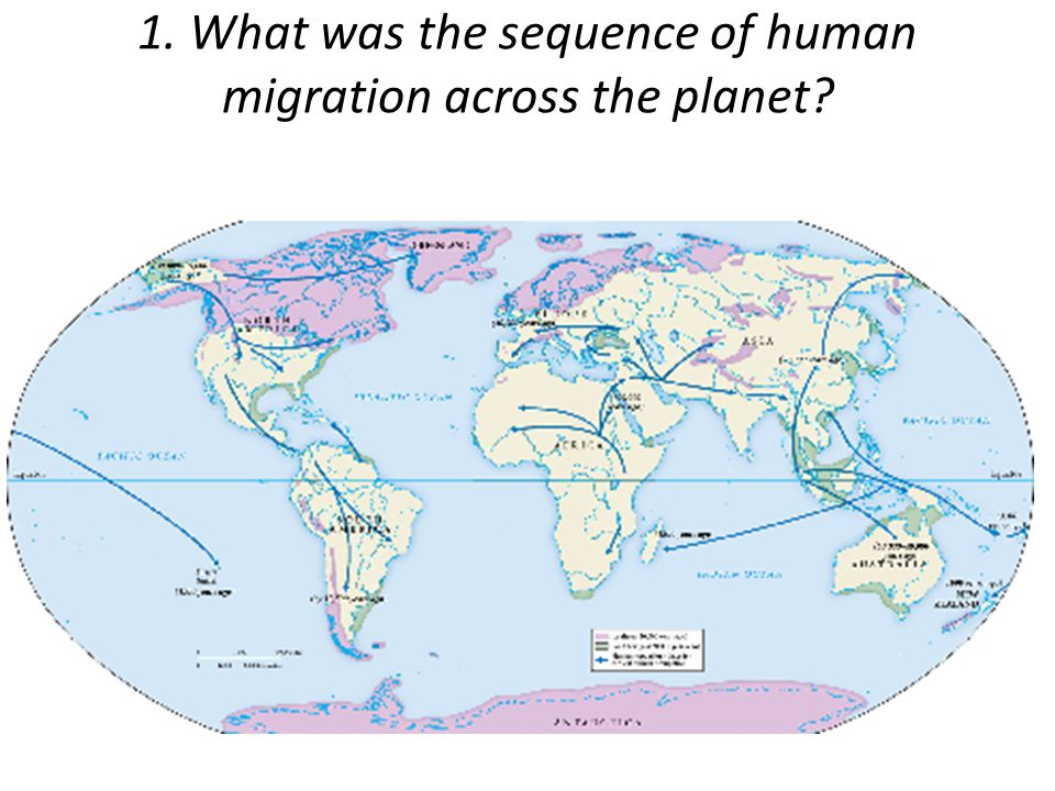 1. What was the sequence of human migration across the planet?