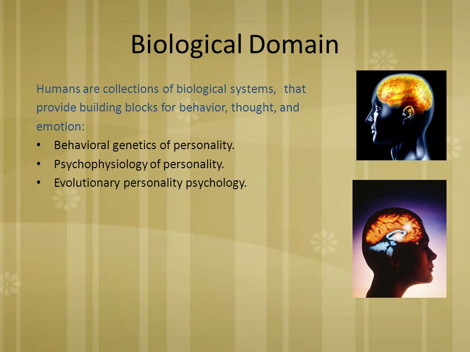 Biological Domain Humans are collections of biological systems, that provide building blocks for behavior, thought, and emotion: Behavioral genetics of personality.
