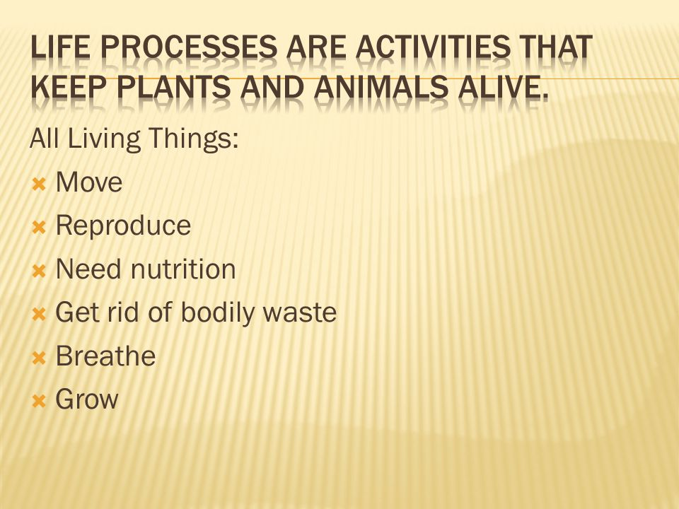 All Living Things:  Move  Reproduce  Need nutrition  Get rid of bodily waste  Breathe  Grow