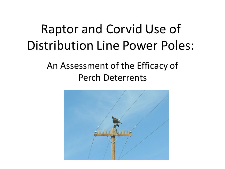 Raptor and Corvid Use of Distribution Line Power Poles: An Assessment of the Efficacy of Perch Deterrents