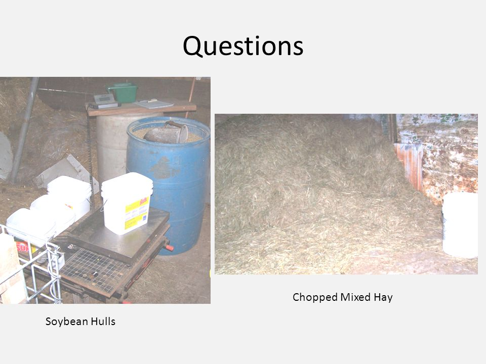 Questions Soybean Hulls Chopped Mixed Hay