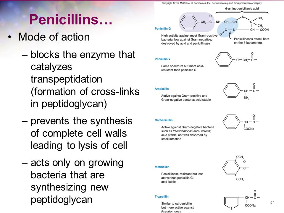 Penicillins… Mode of action –blocks the enzyme that catalyzes transpeptidation (formation of cross-links in peptidoglycan) –prevents the synthesis of