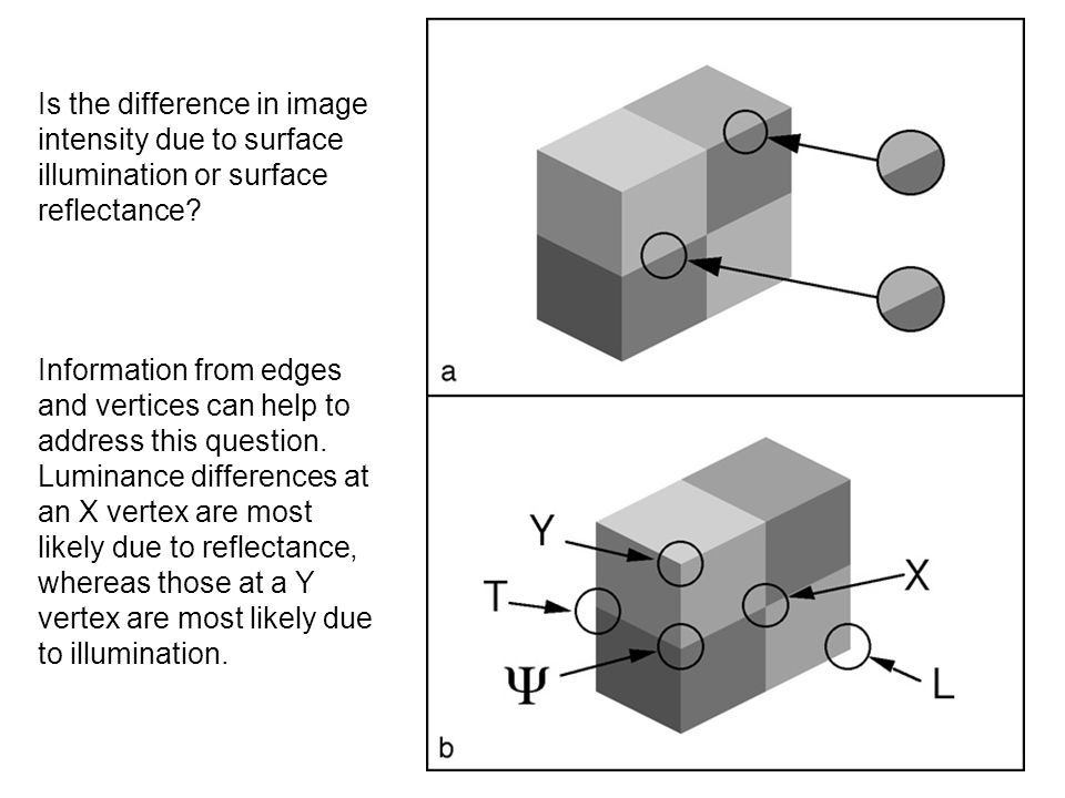 Is the difference in image intensity due to surface illumination or surface reflectance? Information from edges and vertices can help to address this
